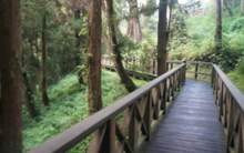 Moychay alishan national forest park taiwan october 2018 44