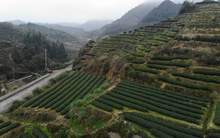 Moychay china tea travel in south fujian mountains tulou 47